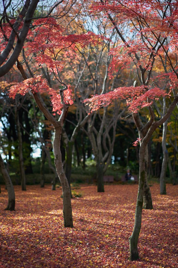Fallen leaves at Kitanomaru Park