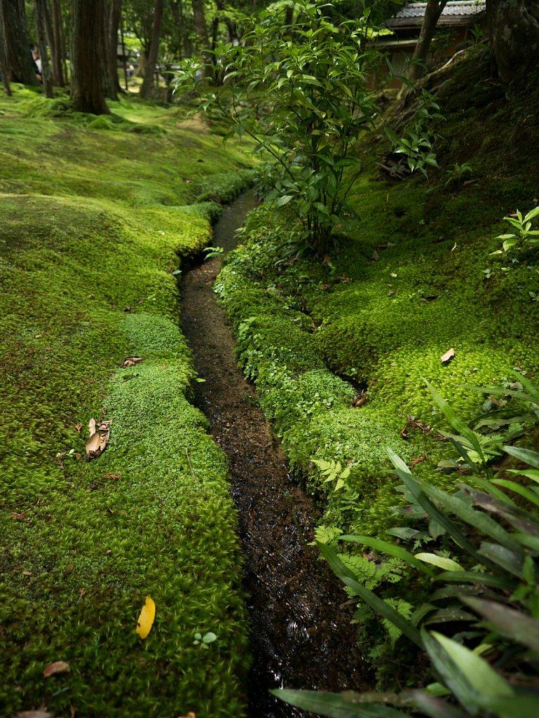Cool stream at Kokedera